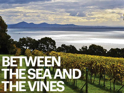 Halliday Wine Companion Geelong Wine Region Guide